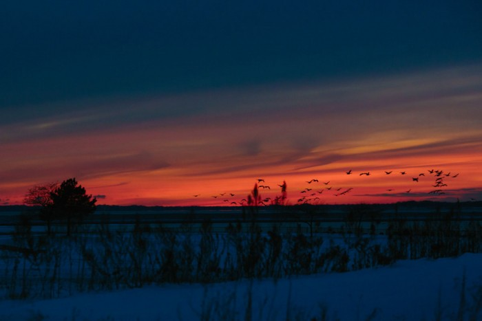 Buffalo Harbor Sunset