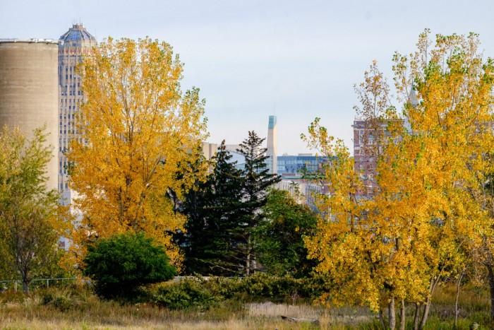 Buffalo Layers, Autumn